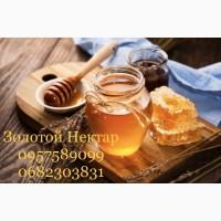 Закупка подсолнечного меда оптом, Кривой Рог (Золотой Нектар)