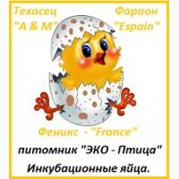 Яйца инкубационные перепела Фараон Испания