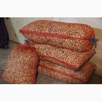 Продам посевной лук