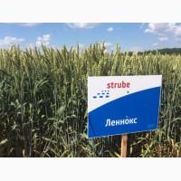 Пшеница озимая сорт Lennox, Немецкая селекция, 1 Реп