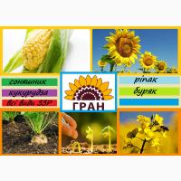 Пропонуємо насіння соняшнику, кукурудзи, та цукрового буряку