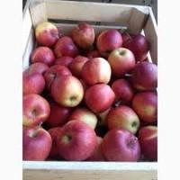 Реализуем яблоки