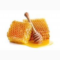 Закупка мёда без антибиотиков