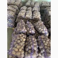Картошка оптом И в розницу