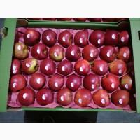 Яблоки с Польши