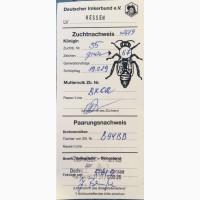 Бджоломатки F1 Бакфаст ПЛІДНІ (замовлення на 2020), Тростянец