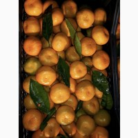 Продам мандарины Грузия Испания