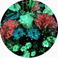 Светящиеся живые цветы - это реально