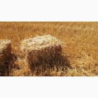 Доставка пшеничной Соломы в тюках по Запорожью