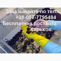Пиявки медицинские нашей биофабрики с бесплатной доставкой по Харькову и регионам Украины