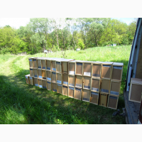 Пчелопакеты на 2018 год карпатка с Доставкой