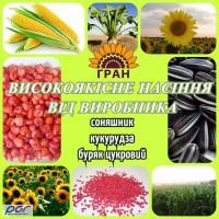 Соняшникове насіння від виробника