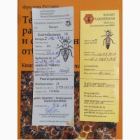 Пчелиные матки Карника Ф1 (пчеломатки)