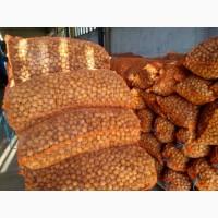 Продам грецкие орехи