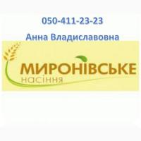 Семена гречихи: сорт Украинка 1 репродукция/ элита