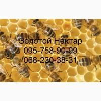 Закупка меда у пчеловодов оптом от 300кг (Золотой Нектар)
