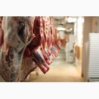 Мясо говядины оптом. Говядина охлажденная, замороженная в брикетах