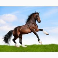 Купую коней