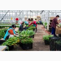 Работа и вакансии для женщин в Голландии