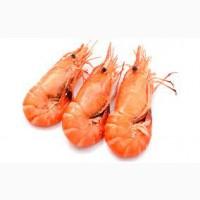 Закупаем креветку и свежемороженую морскую рыбу