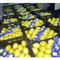 Предлагаем лимоны тонко шкуры