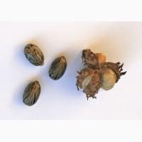 Рицина, клещевина обыкновенная (Ricinus communis L.)