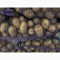 Компания реализует товарный картофель